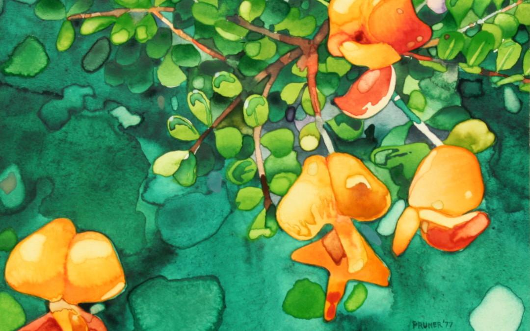 Pruner, Gary – Bladder Flower I