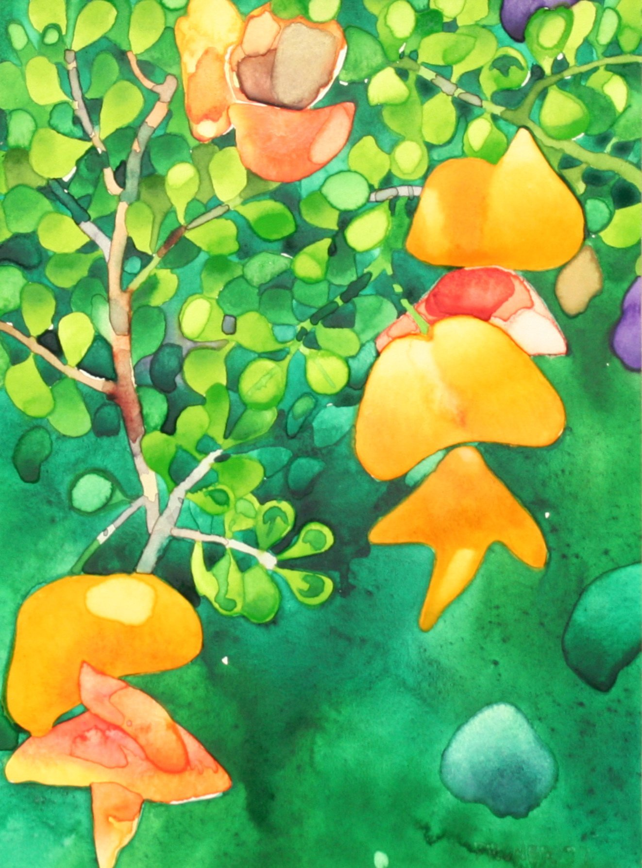 Pruner, Gary – Bladder Flower II