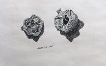 Robert Else, Untitled Pomegranates, 1965