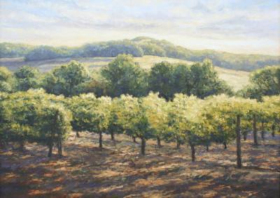 Pettegrew, Peter – Napa Vineyard